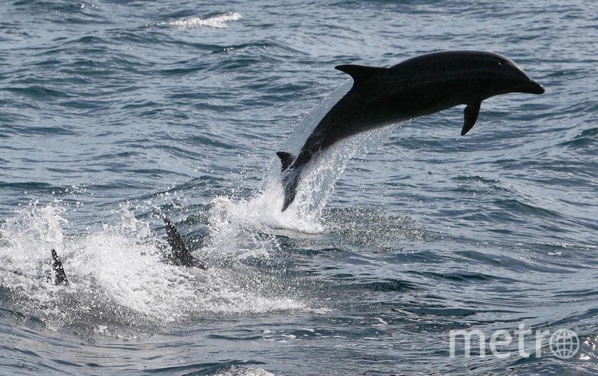 Дельфин. Фото Getty