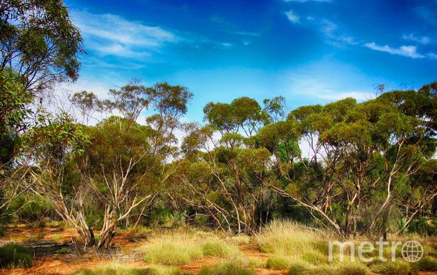 Австралия. Фото Pixabay