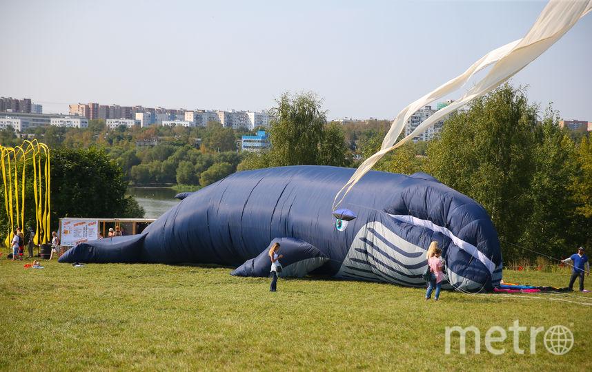 В минувшие выходные синий кит взлететь не сумел. Но в этом году у него ещё появится шанс. Фото Василий Кузьмичёнок