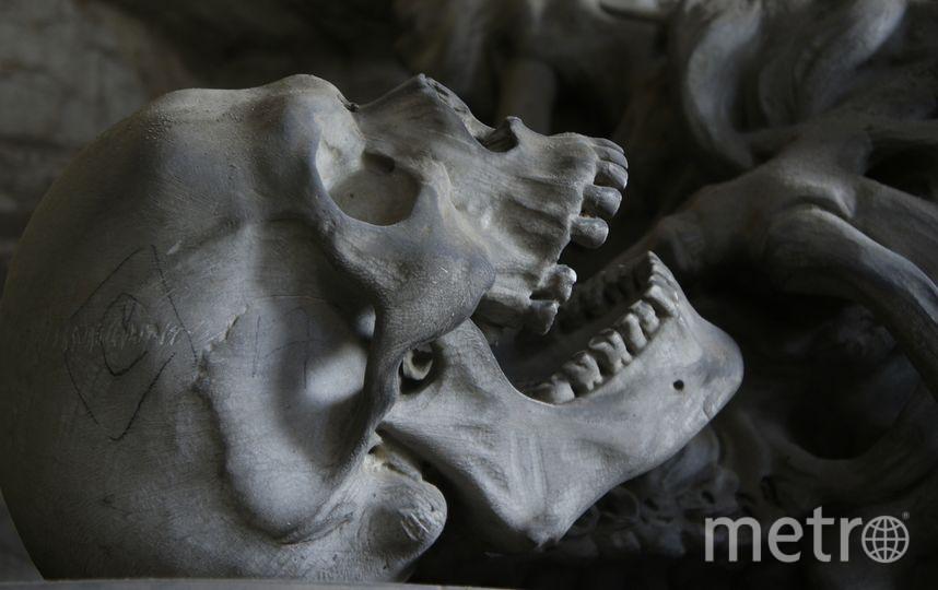 Школьник нашел в Петергофе скелет с золотыми зубами. Фото Pixabay.com