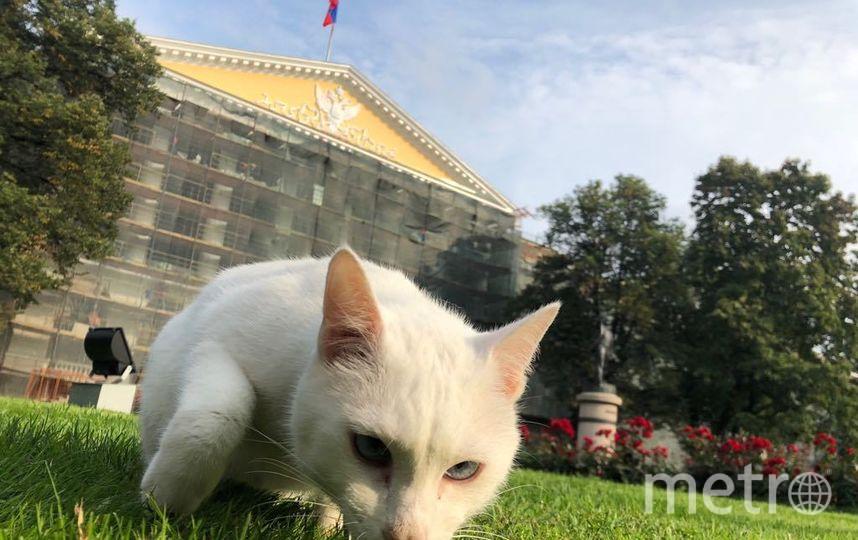 Кот Ахилл посетил Смольный. Фото предоставлено Руспубликой Кошек