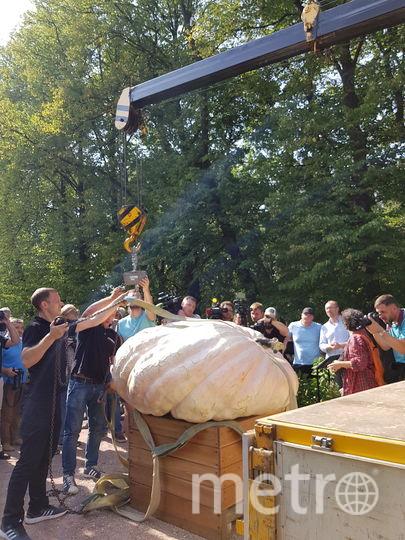 В Москве покажут и съедят самую большую тыкву страны. Фото Василий Кузьмичёнок