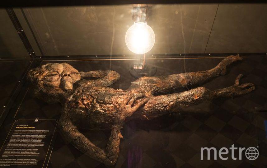 """Экспонаты музея """"НеПравда"""". Фото Святослав Акимов, """"Metro"""""""