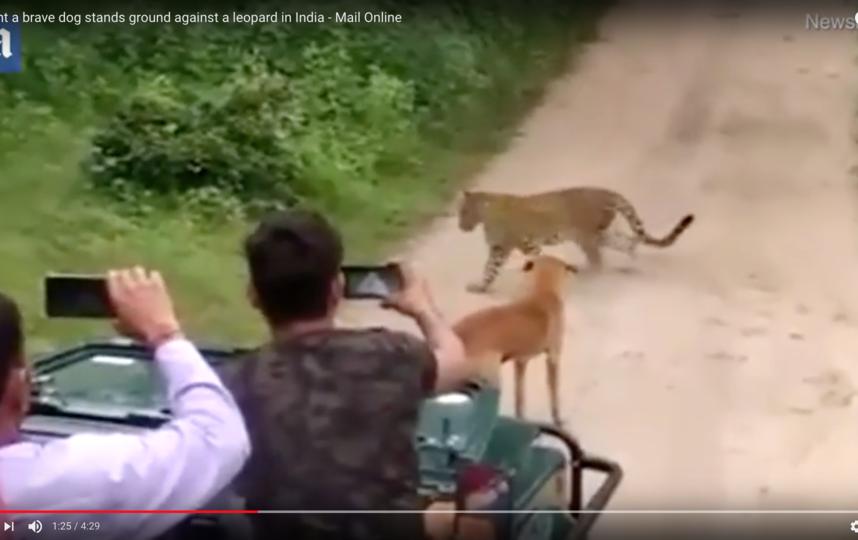 Необычный случай застали посетители парка и засняли на камеру. Фото Скриншот Youtube