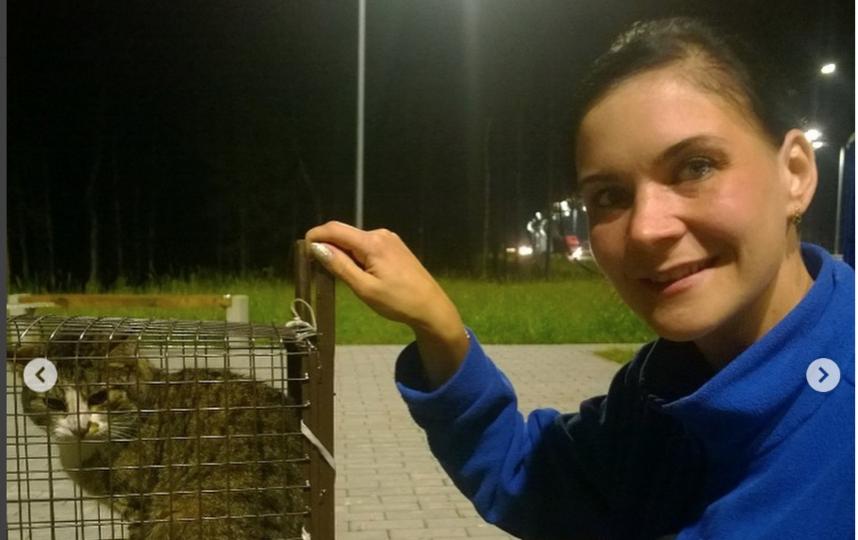 Кота Севу спасли дорожники. Фото instagram @gkavtodor