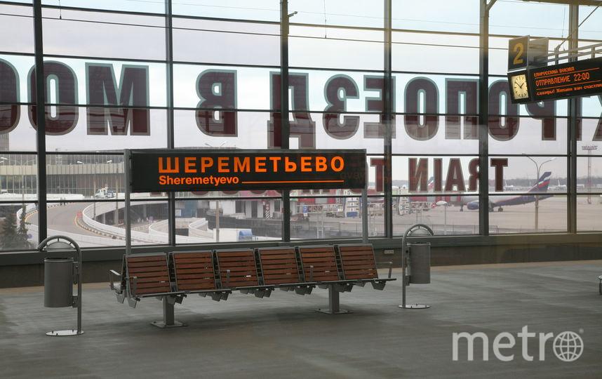 20 змей изъяли у пассажира в московском аэропорту Шереметьево. Фото Василий Кузьмичёнок