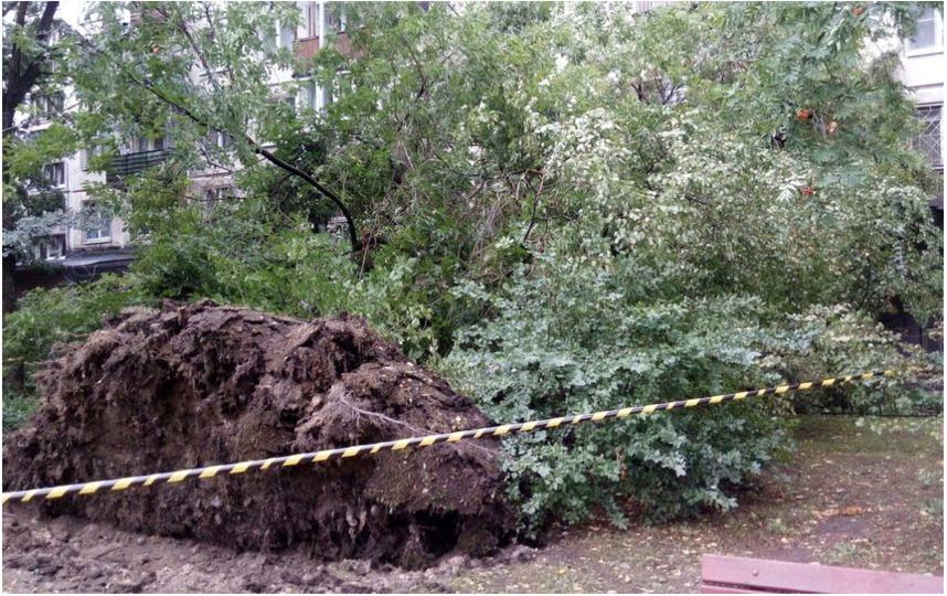 Последствия шторма 21 августа. Фото ДТП и ЧП | Санкт-Петербург | vk.com/spb_today., vk.com