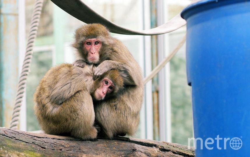 Архивное фото. Фото Ленинградский зоопарк