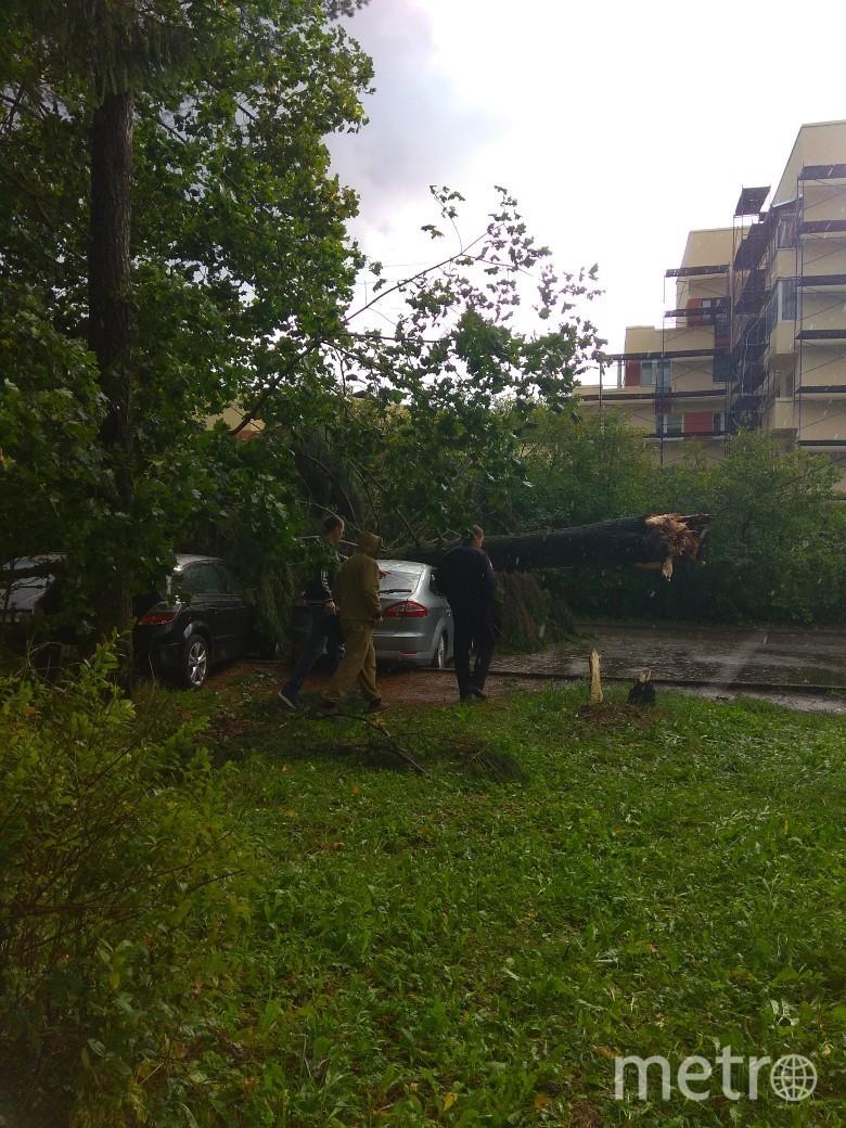 "Упало дерево на ""Мондео"" на стоянке в Зеленогорске. Фото ДТП и ЧП | Санкт-Петербург | vk.com/spb_today., vk.com"