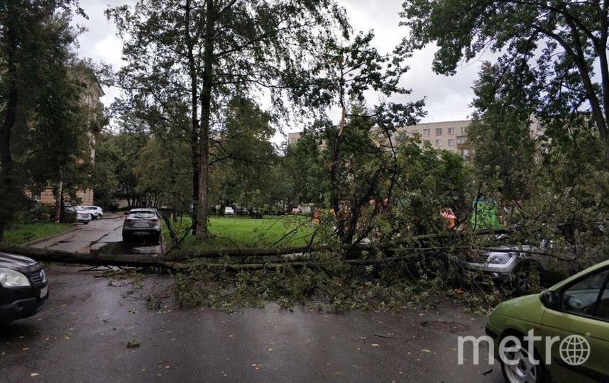 Во дворе дома 2 по Среднеохинскому проспекту дерево перекрыло проезд. Фото ДТП и ЧП | Санкт-Петербург | vk.com/spb_today., vk.com