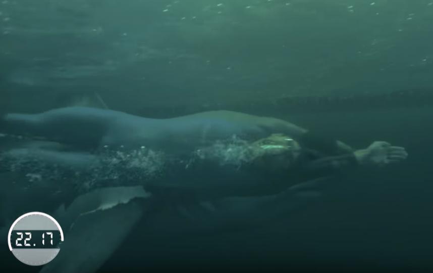 23-кратный олимпийский чемпион по плаванию Майкл Фелпс сражался с белой акулой, правда, соперники плыли по отдельности. На стометровке американец проиграл акуле две секунды. Фото скриншот с видео discovery
