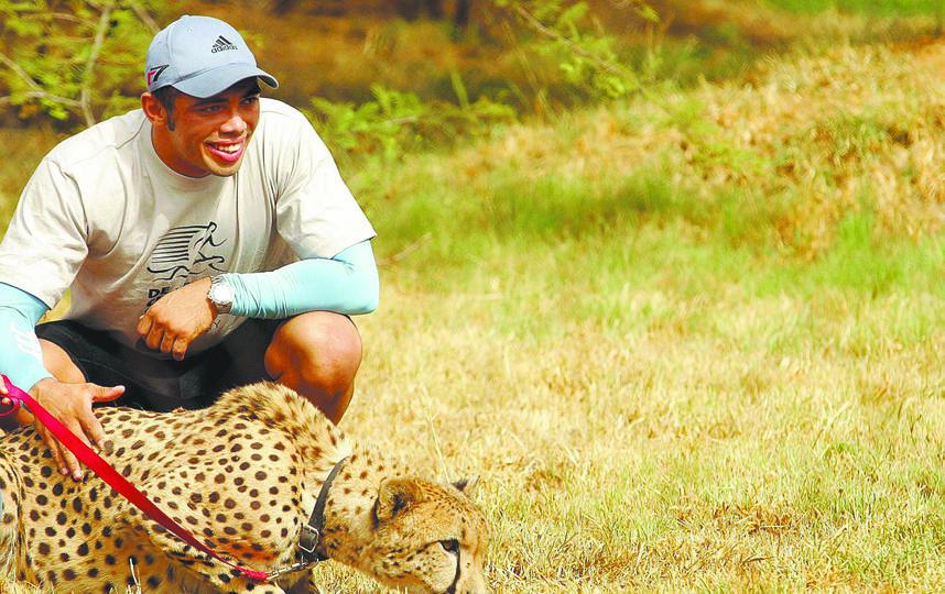 Регбист Брайан Габана бежал наперегонки с гепардом и проиграл. Хищника от человека отвлекали овечьей ногой. Фото Getty