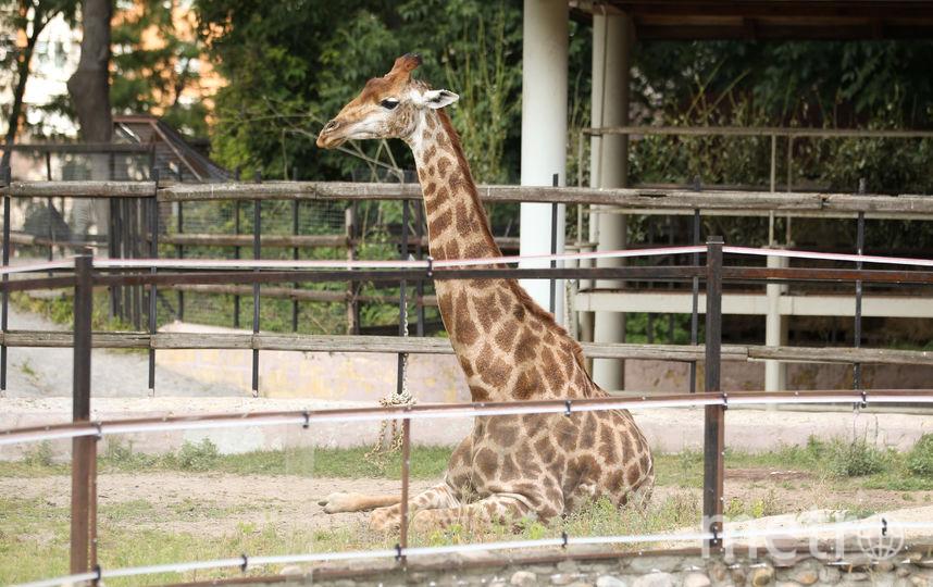 С 16 сентября Московский зоопарк переходит на зимний режим работы. Фото Василий Кузьмичёнок