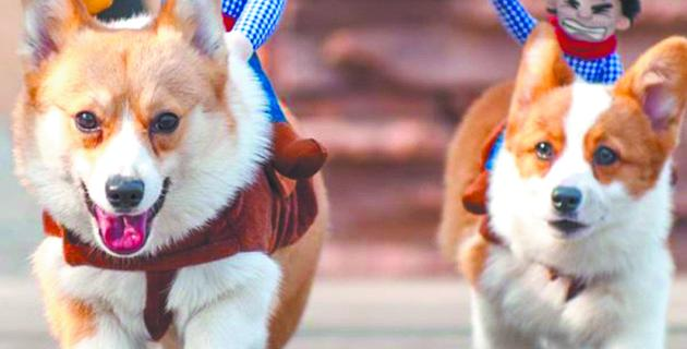 Парад собак.