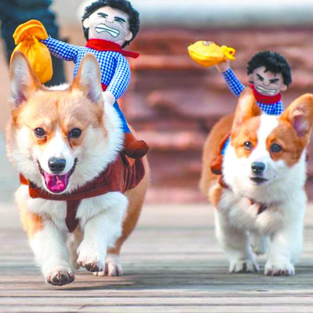 Парад собак. Фото Предоставлено организаторами