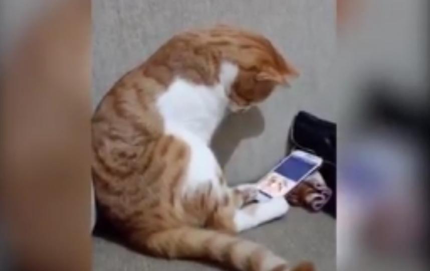 кот увидел на экране телефоне видео, где запечатлен хозяин, которого уже нет в живых. Фото Все - скриншот YouTube
