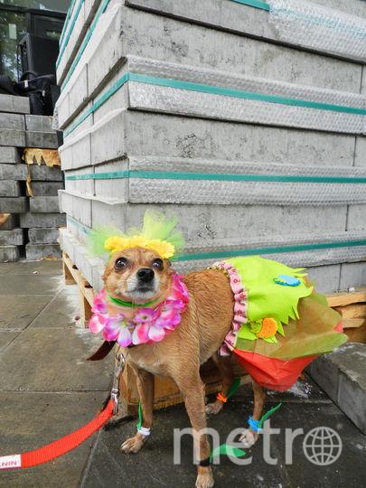 Молли в костюме тропиканки. Фото Юлия Долгова., Предоставлено организаторами