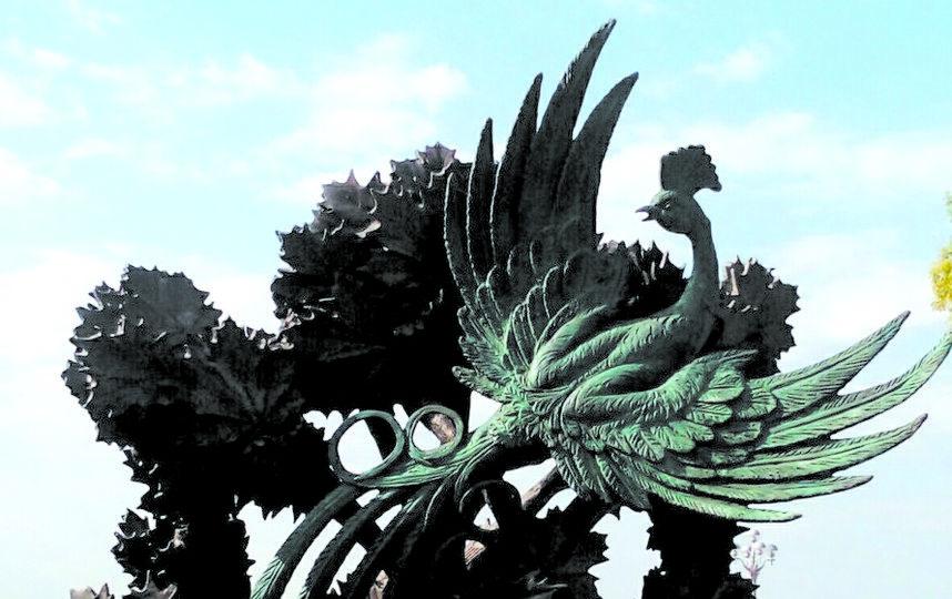 """На клён «прилетела» синяя птица. Фото Егор Важнов, """"Metro"""""""