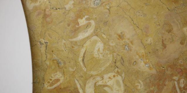 Аэропорт. 1. Колониальные кораллы можно найти со стороны выхода на Аэропортную улицу в стене справа от карты города.