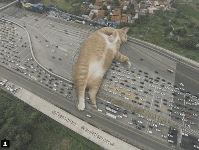 Как отмечает сам художник, основная его цель – заставить людей замечать животных. Фото Скриншот Instagram: fransditaa