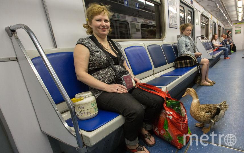 Эта утка вместе со своей хозяйкой ходит в метро – как на работу. Возможно, скоро им придётся покинуть подземку. Фото Интерпресс, Сергей Куликов