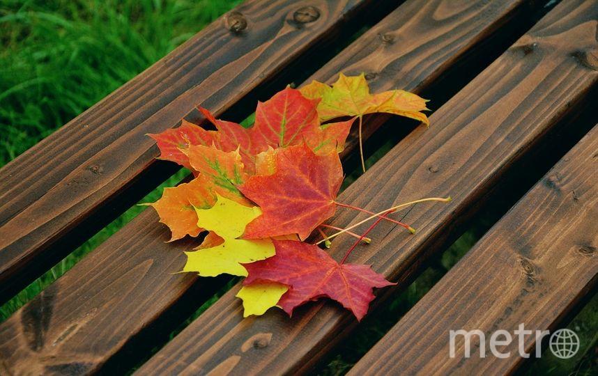 Настала пора искать опавшие листья в парках. Фото https://pixabay.com