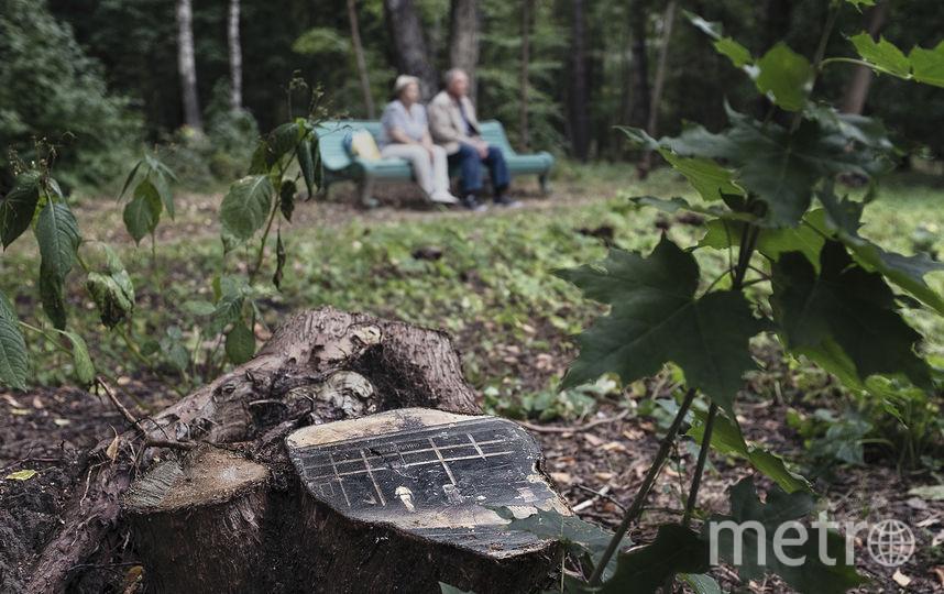 В Переделкино деревья теперь украшают портреты поэтов. На дереве: Вечера в писательском городке. Фото Предоставлено организаторами