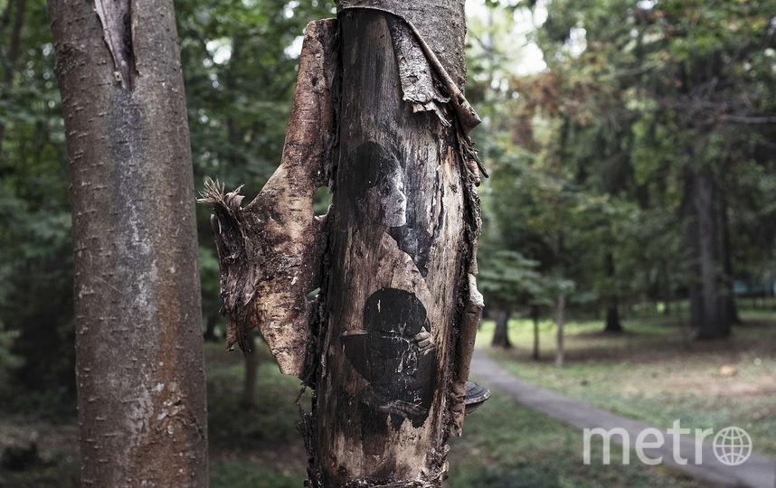 В Переделкино деревья теперь украшают портреты поэтов.На дереве: Белла Ахмадулина. Фото Предоставлено организаторами