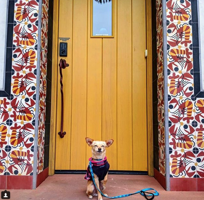 Скриншот instagram @ dogs_a_n_d_doors.