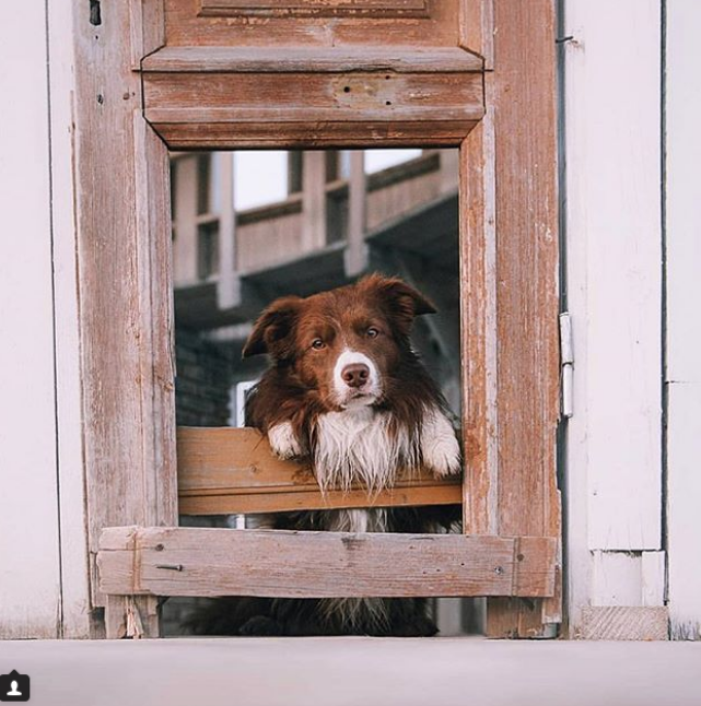 Скриншот instagram @ dogs_a_n_d_doors.