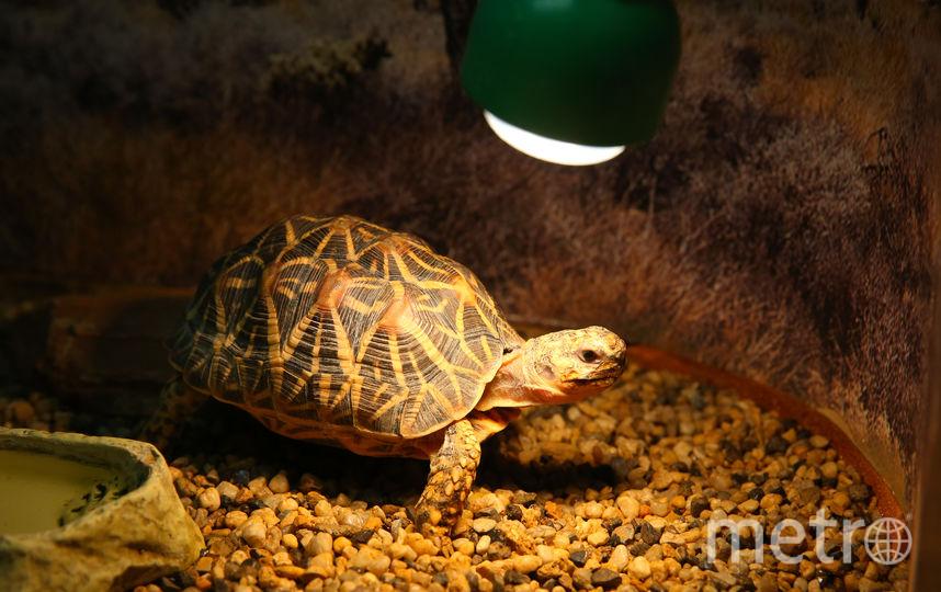 Черепаха. Фото Василий Кузьмичёнок
