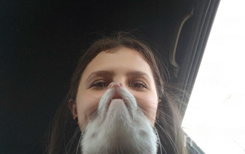 У меня есть борода из хорька! Хорёчка зовут Плюшка. Очень ласковая и энергичная девочка, мы с ней очень любим друг друга! Фото Даша