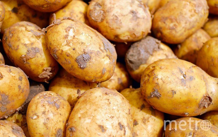 Чаще всего превышение количества нитратов содержится именно в раннем картофеле, причём больше всего их в кожуре. Фото Pixabay