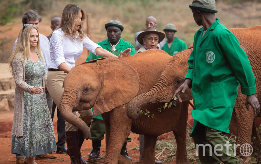 Мелания Трамп в кенийском Национальном парке. Фото AFP
