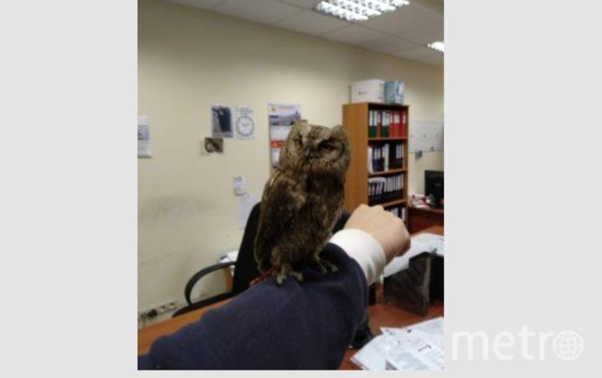 Спасённая сова. Фото gov.spb.ru