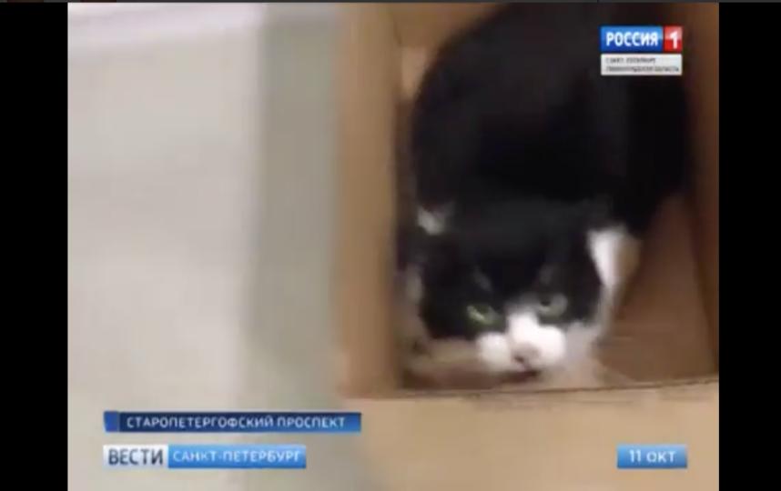 Скриншот видео YouTube / Россия 1. Фото Скриншот Youtube