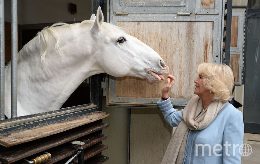 Камилла Паркер-Боулз. Фото Getty