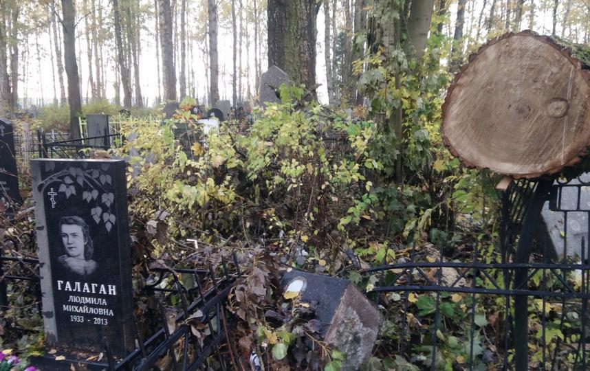 На Серафимовском кладбище в Петербурге распилка деревьев разрушила памятники. Фото Дмитрий Романов, https://vk.com/dmitrysupertramp