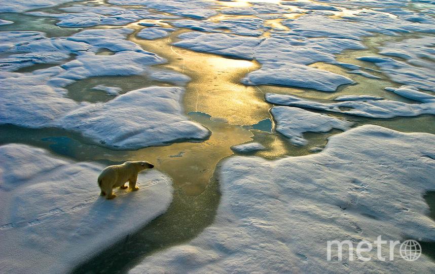 Первые последствия глобального потепления мы ощущаем уже сейчас. Фото MWN