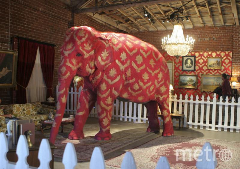 """Проекты Бэнкси. Слон на выставке. Фото предоставлена организаторами, """"Metro"""""""
