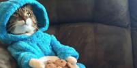 Посольство США пригласило австралийцев на пижамную вечеринку с печеньями