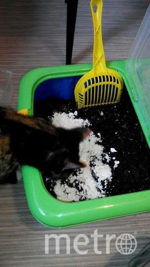 """Перед тем, как положить отходы в компост, их лучше подморозить, проварить, высушить или нарезать мелкими кусочками. Фото """"Metro"""""""
