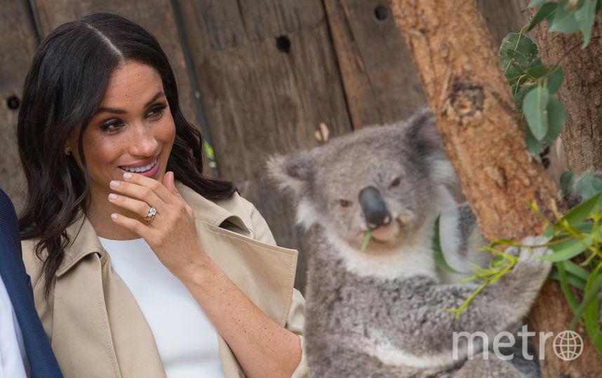 Меган Маркл и коала. Фото Getty