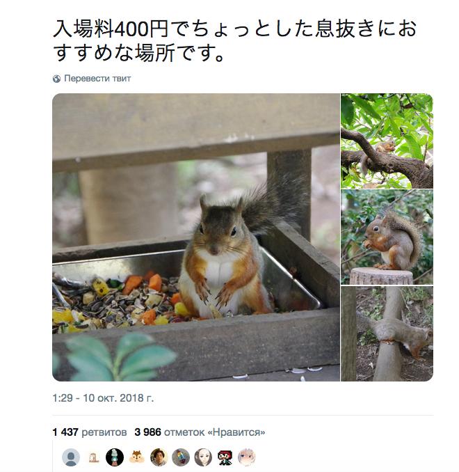Белка с большой грудью заставила японцев пойти в лес: Фото. Фото Скриншот Twitter: @boblim1204