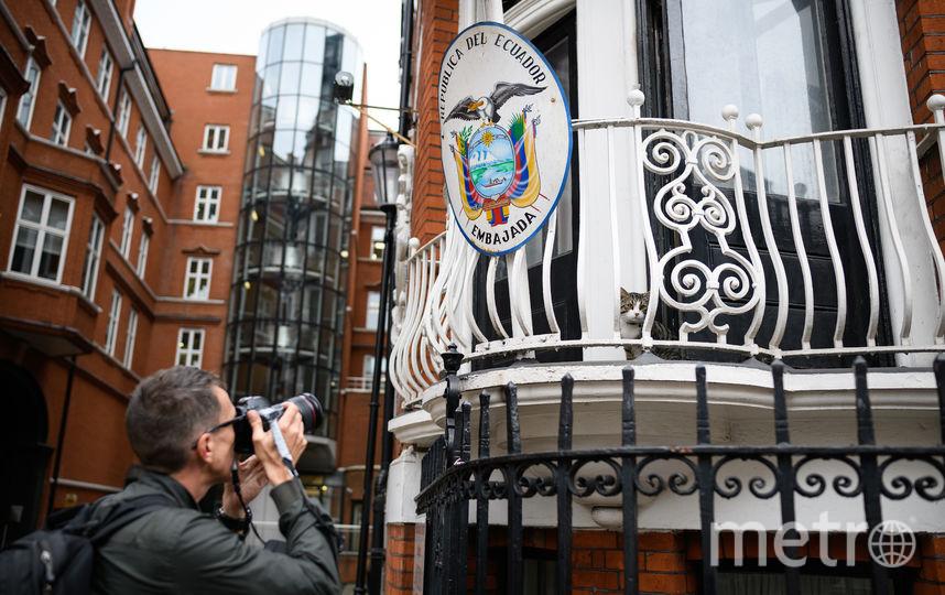 Кот Джулиана Ассанжа в посольстве Эквадора в Лондоне. Фото Getty
