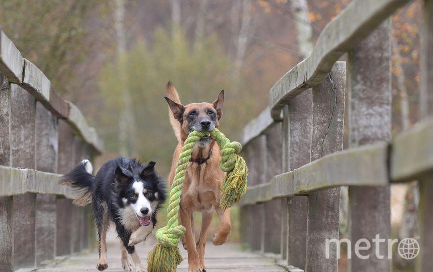 В ходе эксперимента хозяева называли знакомые собакам предметы и показывали их. Фото Pixabay