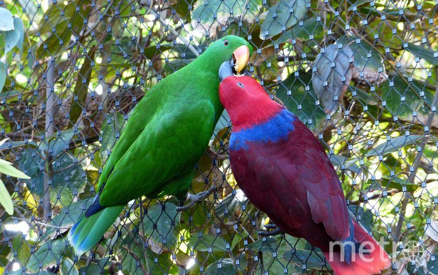 Самцы птиц привлекают самок либо своей яркой внешностью, либо красивым пением. Фото Pixabay
