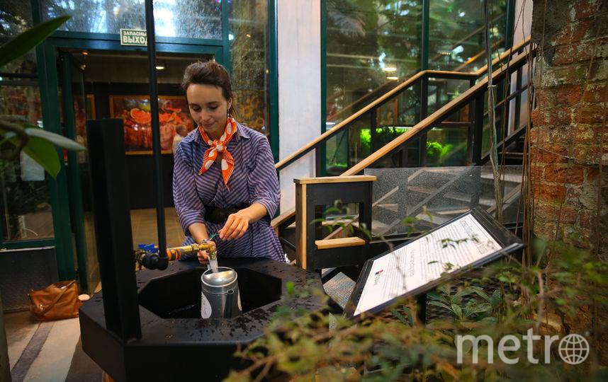 В Ботаническом саду МГУ стартовал экологический проект. Фото Василий Кузьмичёнок