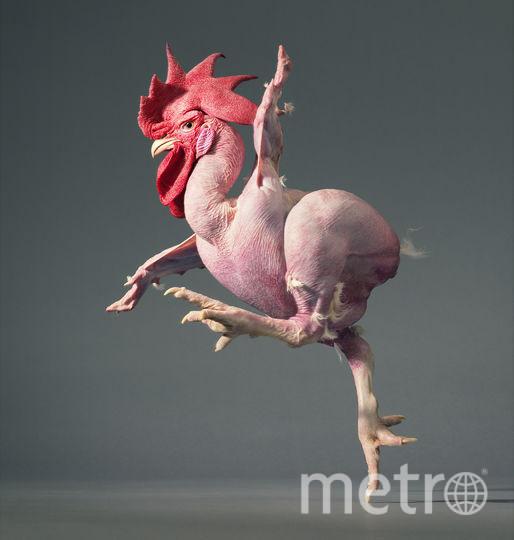 Цыплёнок-балерина. Фото Предоставлено Центром фотографии им. братьев Люмьер