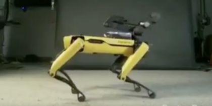 Видео с танцующей собакой-роботом напугало Сеть своей развратностью
